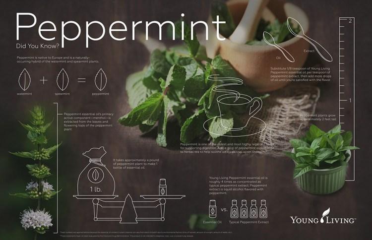 PeppermintInfograph